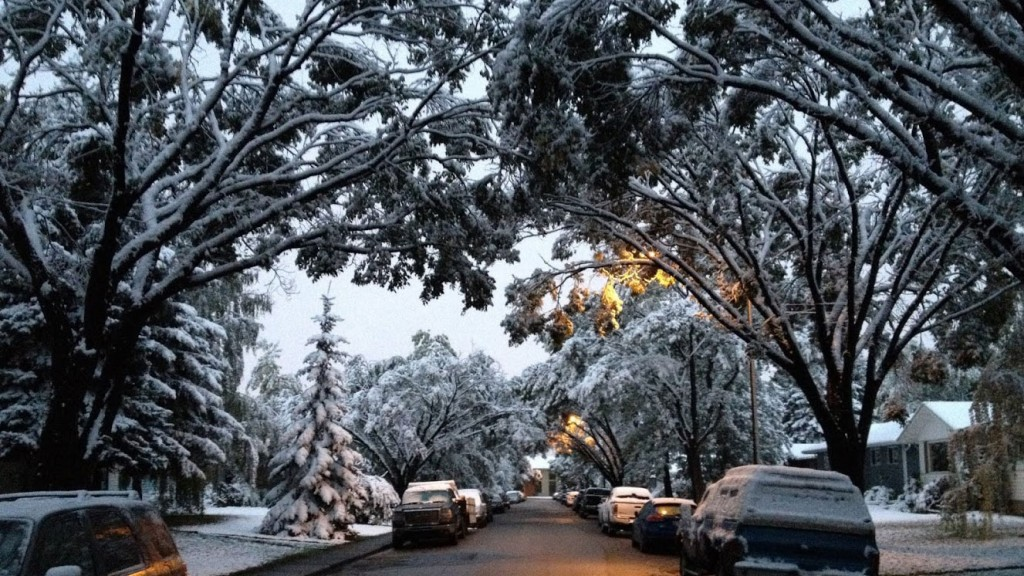 Use our winter driving tips on this snowy street in Calgary.
